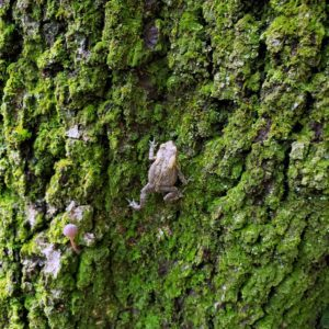Toad on Tree with small Toad Stool